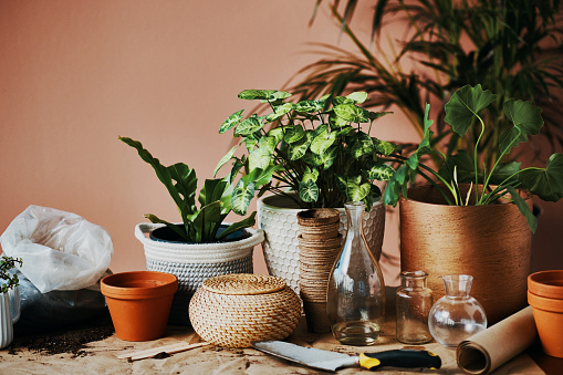 Shot of plants growing in vases at home