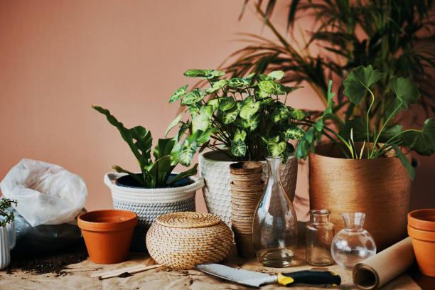 Everything a gardening fanatic needs stock photo