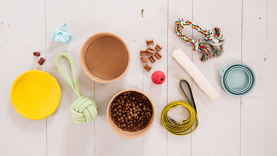 Everything for the dog flat lay of dog accessories equipment Dog food, dog leash, bowls, snacks and toys