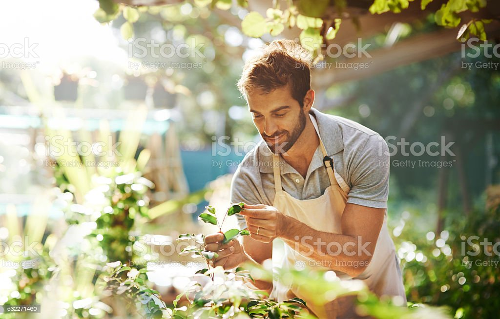 Everything grows with love stock photo