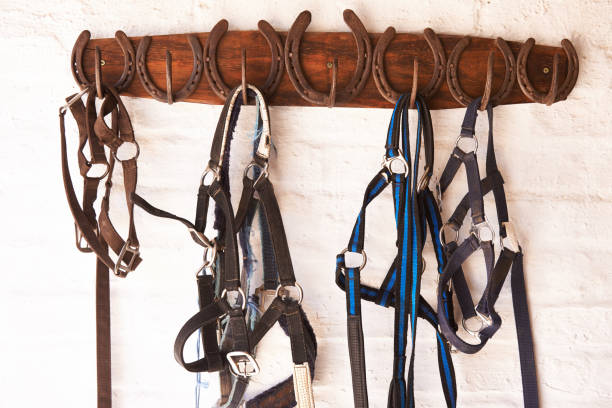 everything in its place - horse bit stock photos and pictures