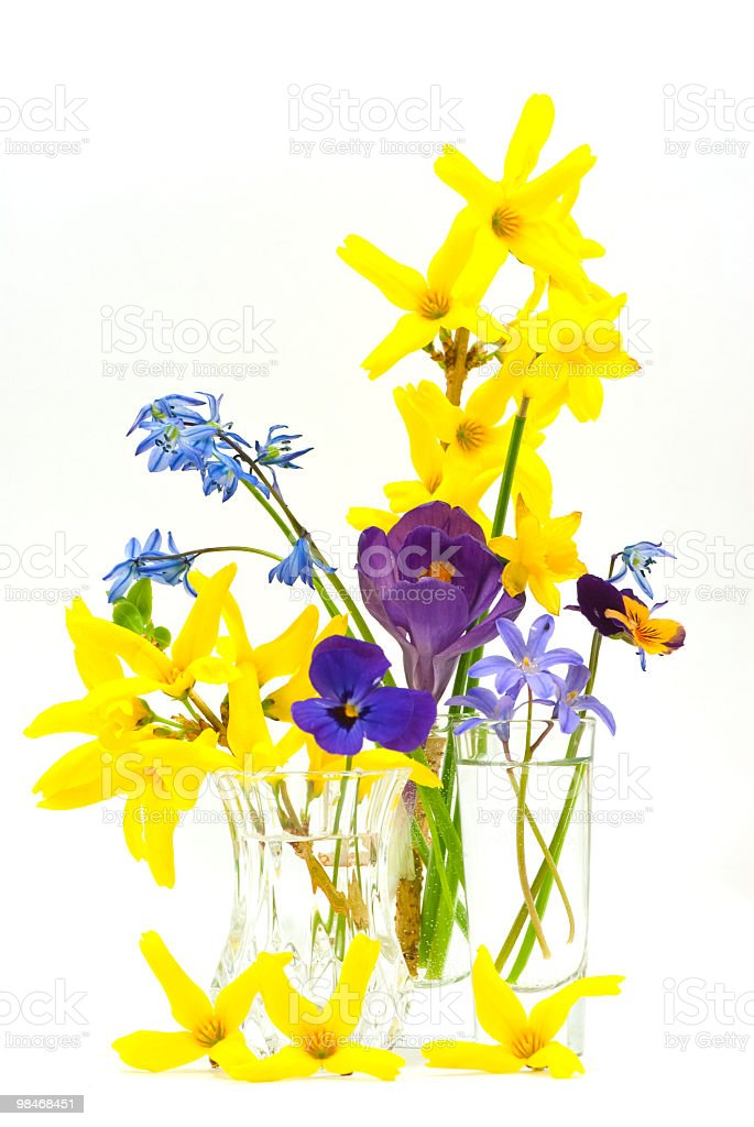 Evidence of  Spring royalty-free stock photo