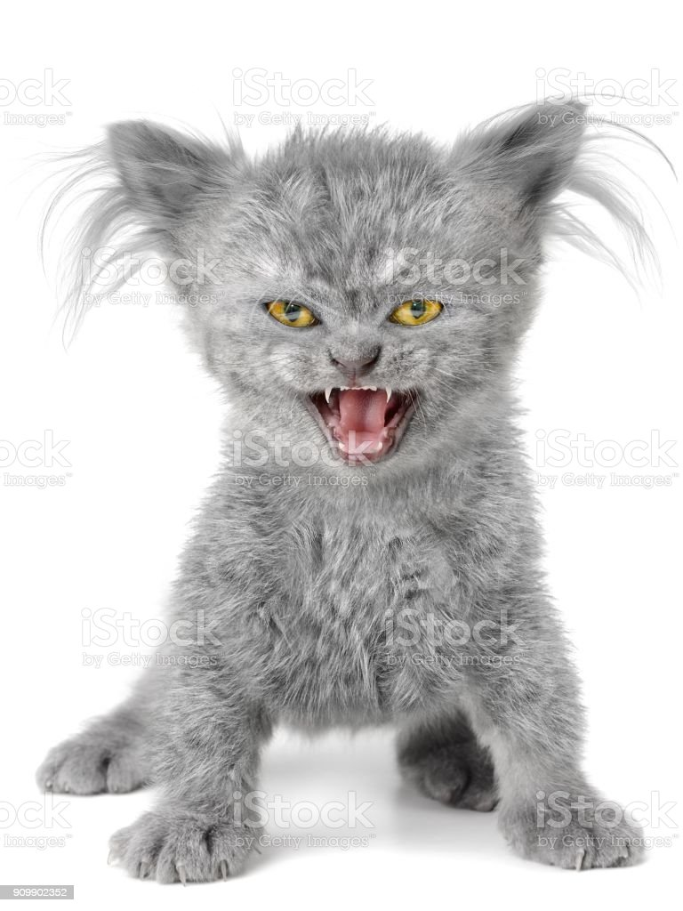 Evil kitten on the wite background stock photo