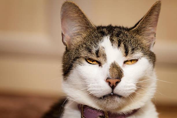 Evil looking cat stock photo