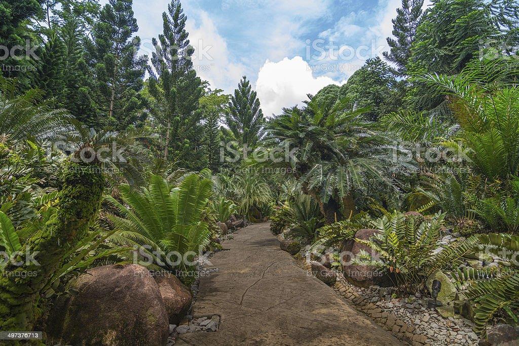Evolution Garden at botanic garden, Singapore stock photo