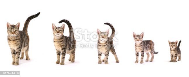 5 Photos of the same cat over a period of 1 year.
