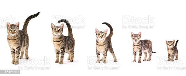 Evolution of a cat picture id157424414?b=1&k=6&m=157424414&s=612x612&h=c3grxdilbbdqmcr9kwjsdsjuh4bzckxualoyom p my=