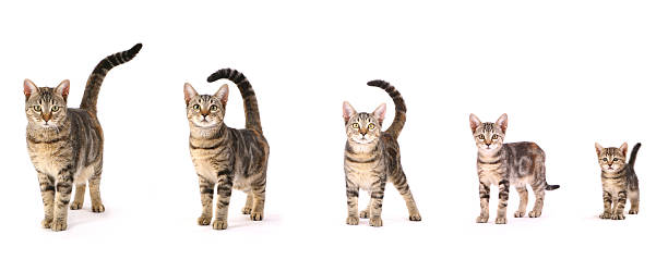 Evolution of a cat picture id157424414?b=1&k=6&m=157424414&s=612x612&w=0&h=fnhxranlrupldfid8mwglip6cferxnzwu4j99wdpylo=