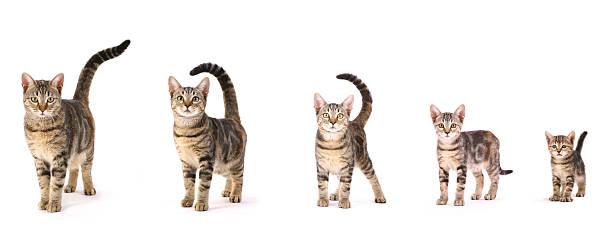 Evolution einer Katze – Foto