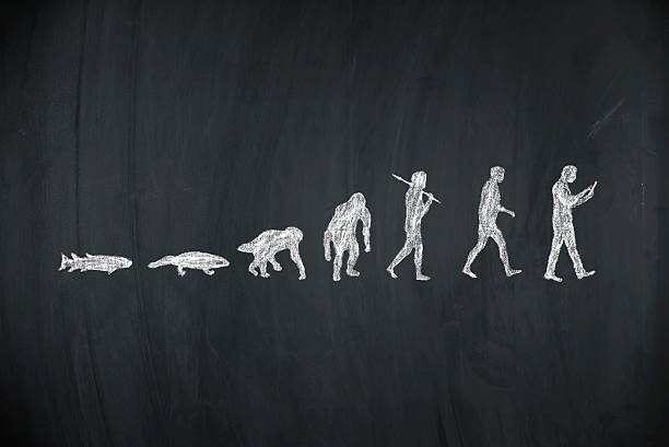 evolution of human - darwin stock photos and pictures