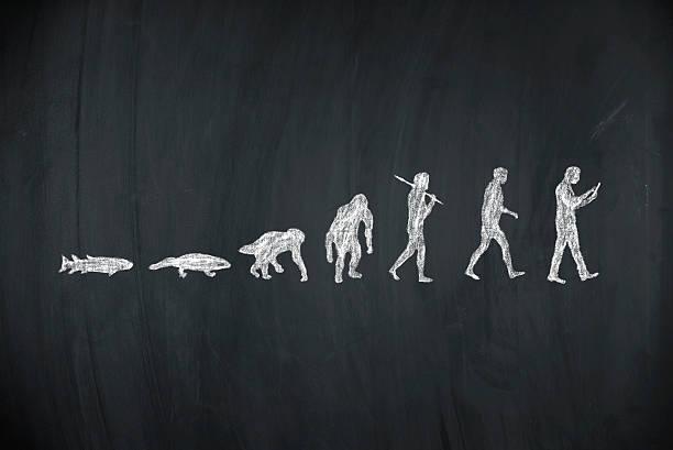 evolution of human stock photo