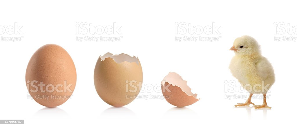 Evolution stock photo