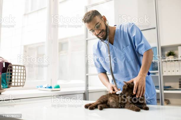 Examining cat picture id1132760207?b=1&k=6&m=1132760207&s=612x612&h=ha7mlp9joxusg0o8sohtou4r ieqcuewwgls9ticotg=