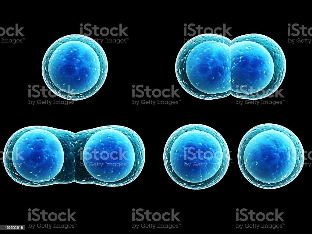 Example of how cell division works stock photo