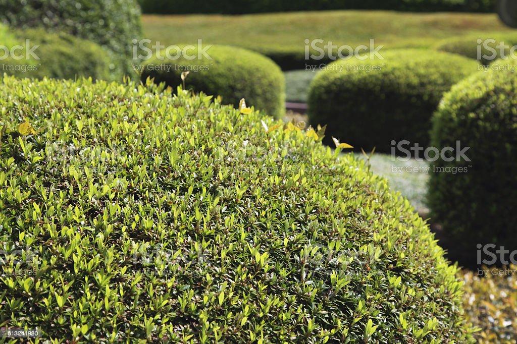 Example of topiary stock photo