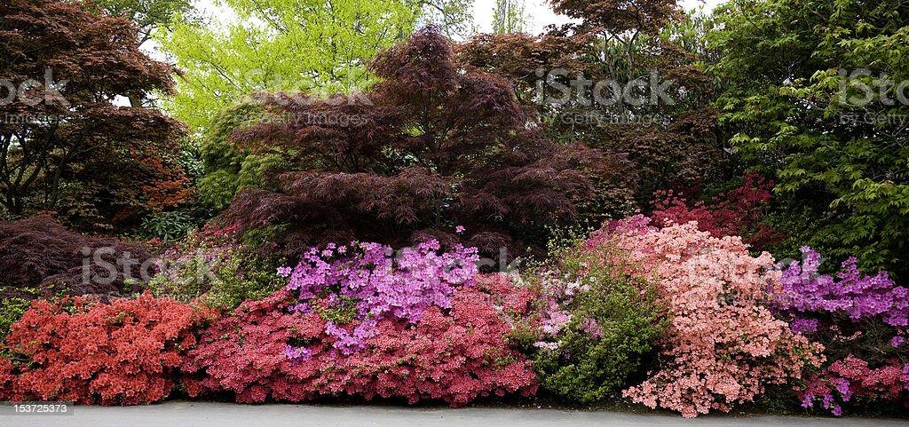 Exbury Gardens, Hampshire, UK bildbanksfoto