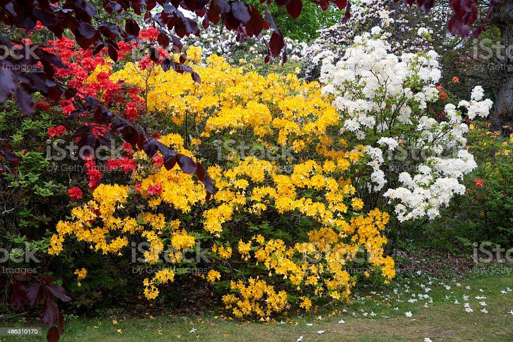 Exbury Gardens, Hampshire, UK stock photo