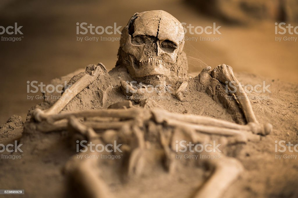 Excavated skeleton stock photo