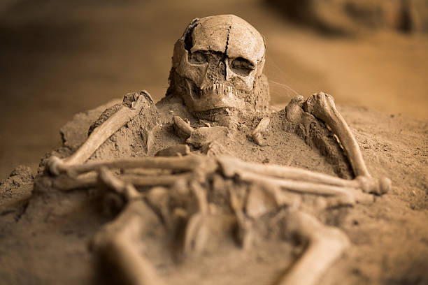 Excavated skeleton excavated skeleton archaeology stock pictures, royalty-free photos & images