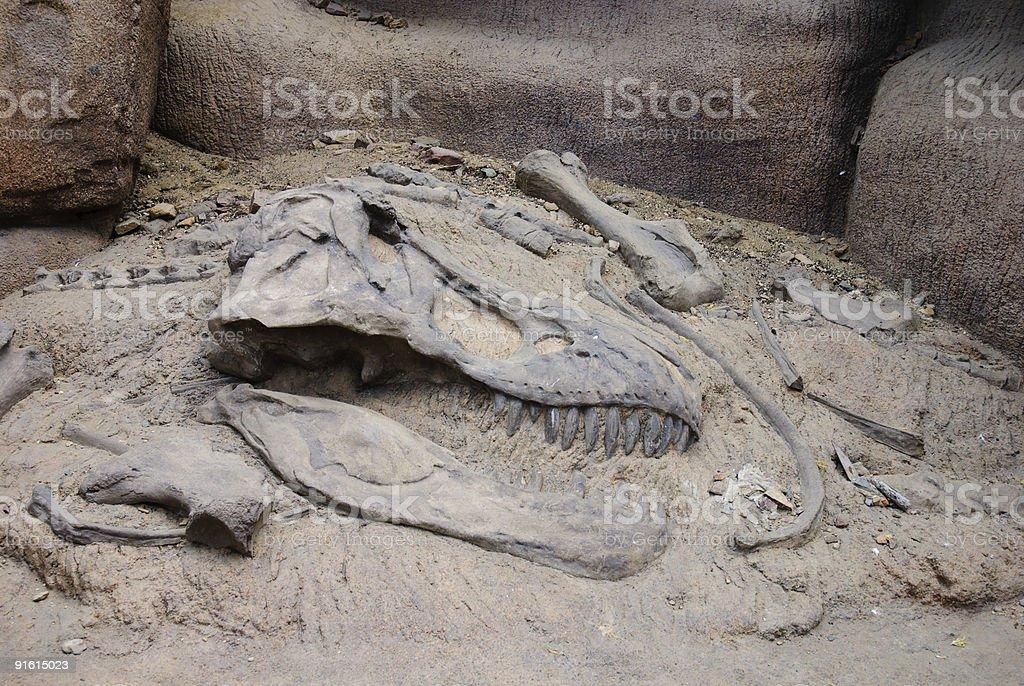 だが、恐竜の骨 ストックフォト