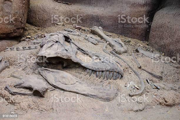 Photo of Excavating the bones of a dinosaur