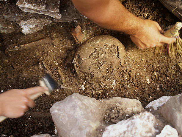 excavation of skull archaeology students excavate skull in the graveyard near the stadium in the hellenistic town of messene (369 bc AA 395 ad), southern greece archaeology stock pictures, royalty-free photos & images