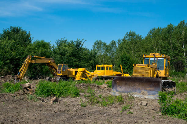 bagger und bulldozer räumen waldflächen ab. schweres gerät. - baumgruppe stock-fotos und bilder