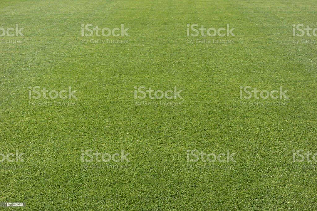 Excellent grass stock photo