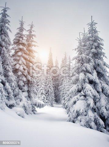 istock Excellent landscape in Carpathian mountains, Ukraine, Europe. Beauty world. 859055074