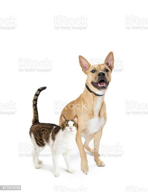 Excited cat and dog together looking up picture id912323236?b=1&k=6&m=912323236&s=612x612&h=xln1gdvlofdq6vjwm8voimaiqzjehkbvyqmbklvyw3o=