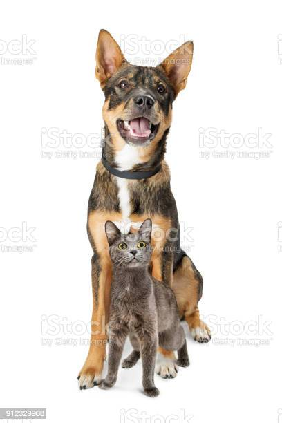 Excited dog and cat sitting together looking up picture id912329908?b=1&k=6&m=912329908&s=612x612&h=y2kcmwin3ew7gc2wmqngdoiejtskzhcv7yhad09krvq=