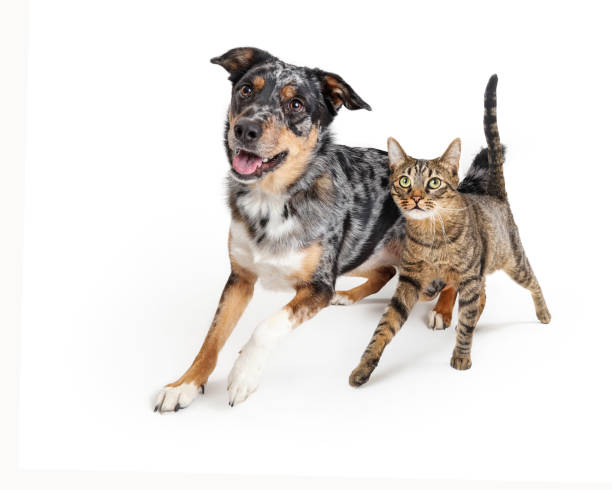 Excited Dog and Cat Walking Forward Together stock photo