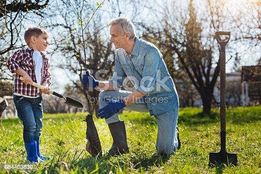 excited senior gardener and kid setting tree in garden stock photo 684403830 istock