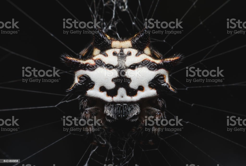Excited Spider On Web In The Dark Interesting Mysterious And