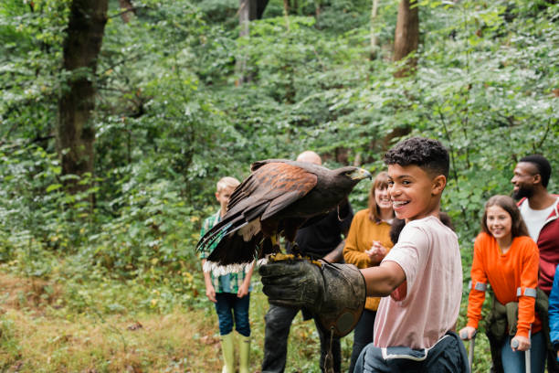Excited to Experience Something New Teenage school boy standing with his classmates outdoors. They are on a field trip to a falconry where the teenage boy is excited while experiencing a Harris hawk flying onto his hand. field trip stock pictures, royalty-free photos & images