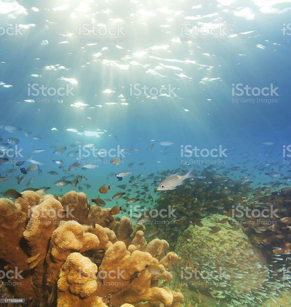 exciting underwater panorama stock photo