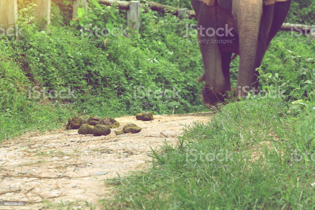 excrement of elephant on ground in elephant camp can be make to paper stock photo