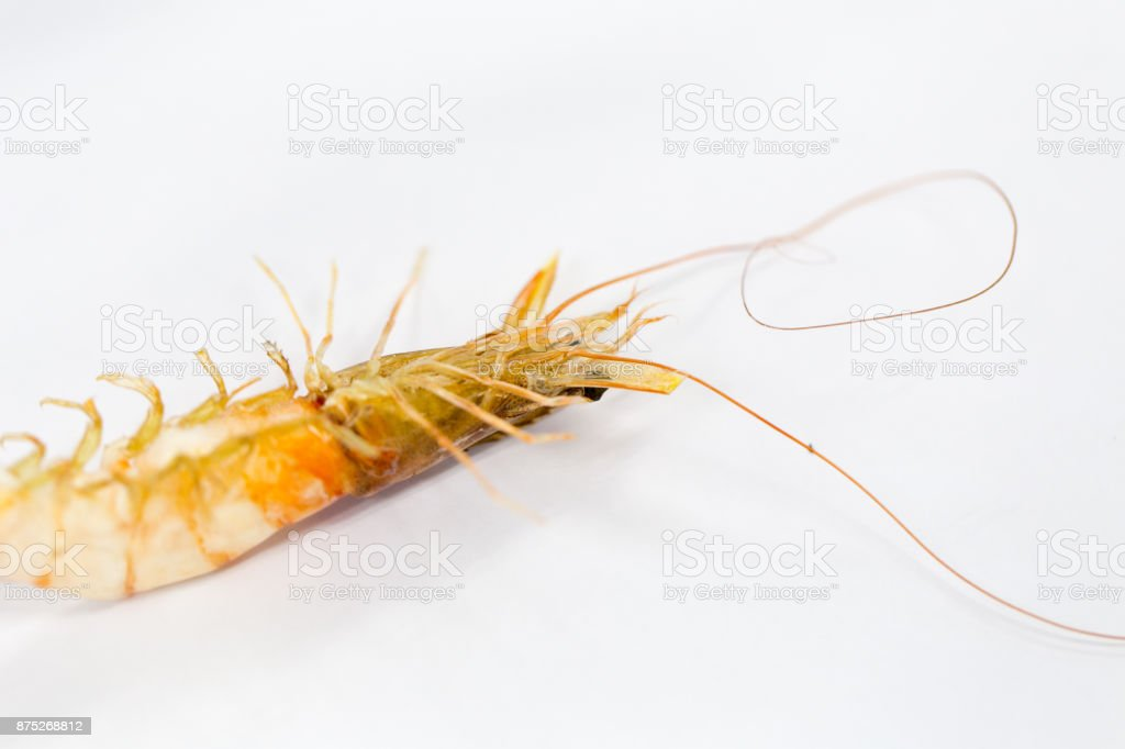 Exemplar of Macrobrachium rosenbergii, also known as the giant river prawn or giant freshwater prawn for education. stock photo
