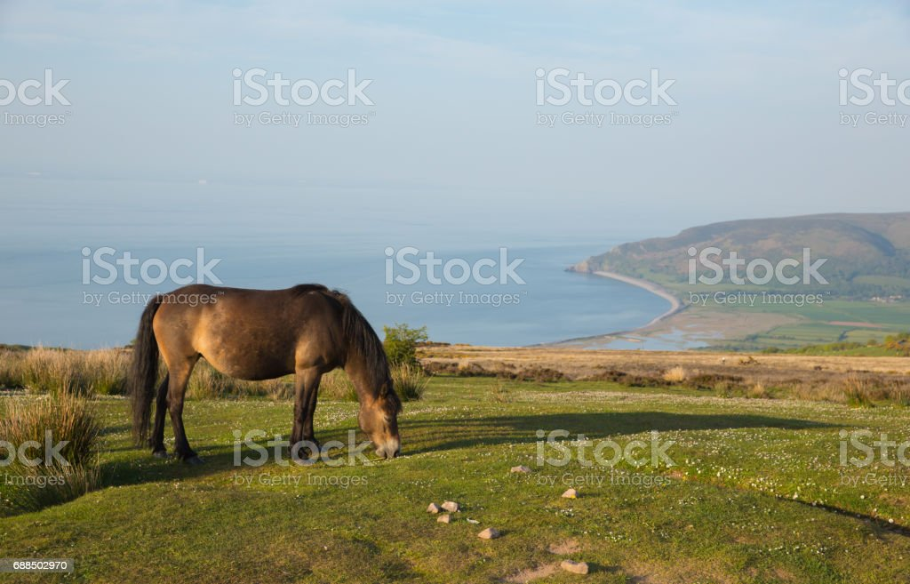 Exmoor Heritage Coast view towards Porlock Weir with pony on a summer evening in Somerset UK stock photo