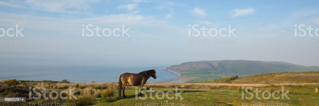 Exmoor national park panoramic view with pony to Porlock Somerset coast on a summer evening stock photo