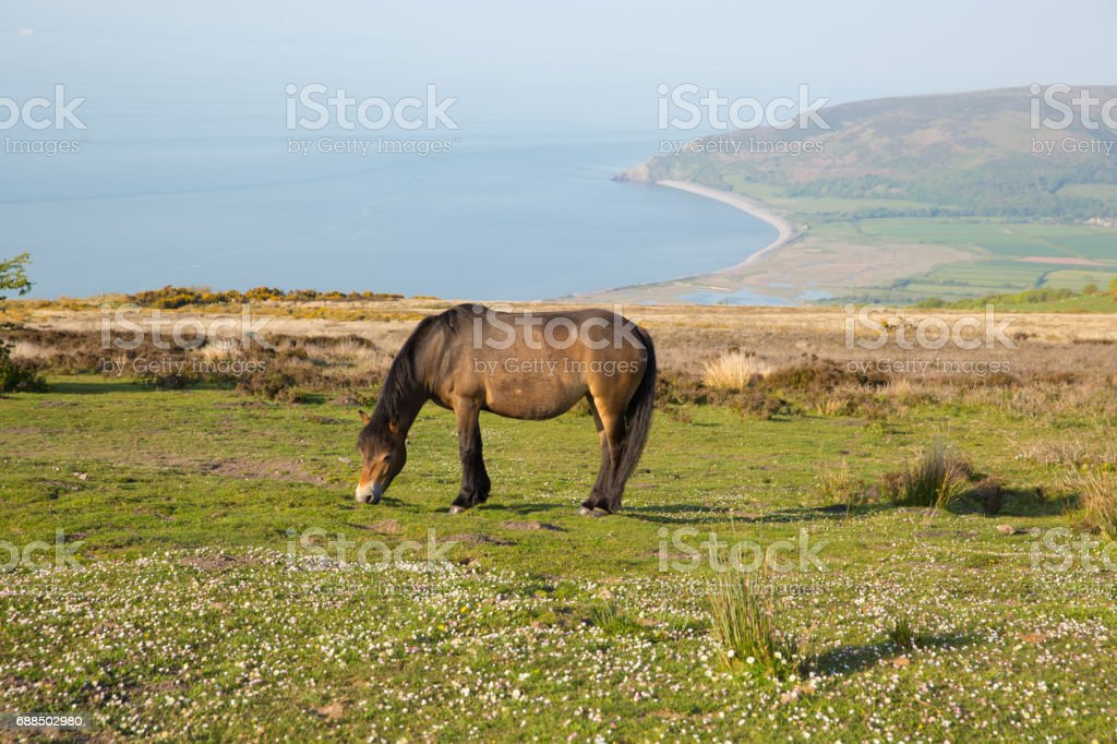 Exmoor national park view to Porlock coast on a summer evening stock photo