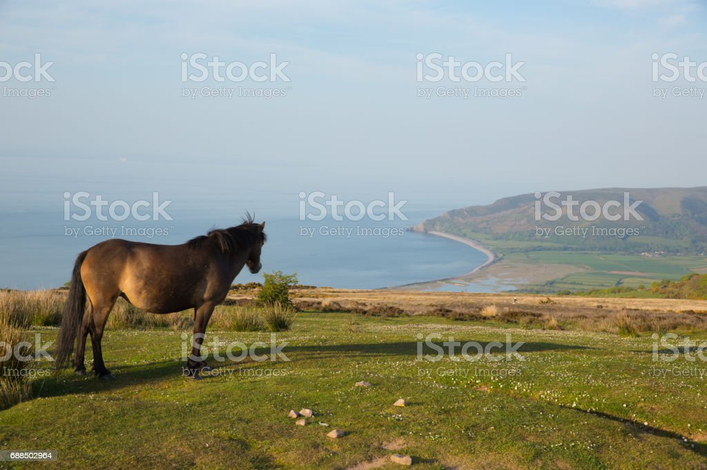 Exmoor national park view with pony looking towards Porlock Somerset coast on a summer evening stock photo