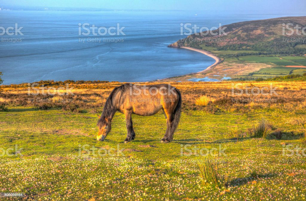 Exmoor national park view with pony towards Porlock Somerset coast in hdr stock photo
