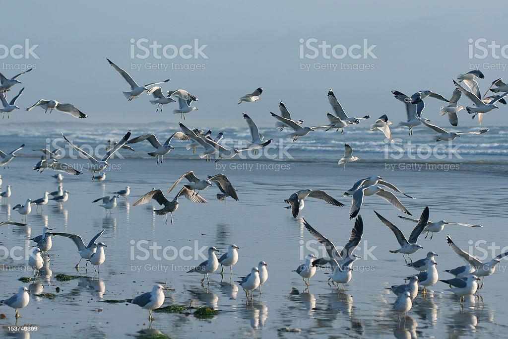 Exodus of Seagulls stock photo