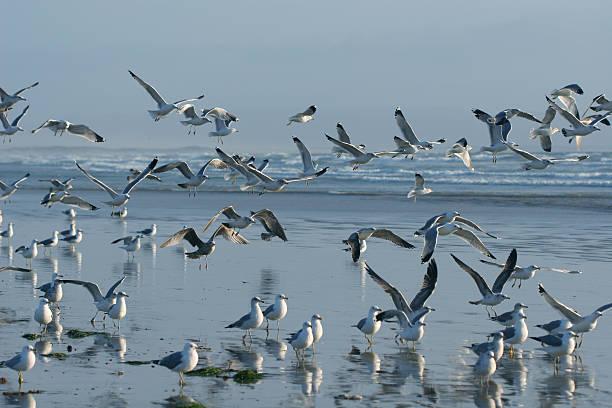 Exodus of Seagulls stock photo