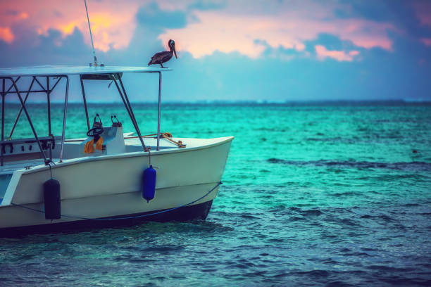 exotic beach boat in caribbean sea. dominican republic, punta cana. - пеликан стоковые фото и изображения