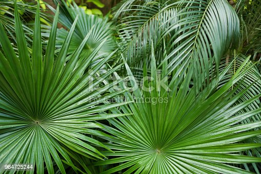 Exotic Big Leaves Background Photo Stock Photo & More Pictures of Asia