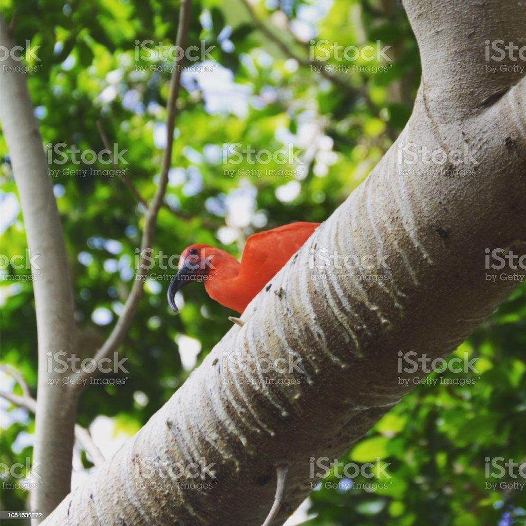 Exotic bird on tree limb.