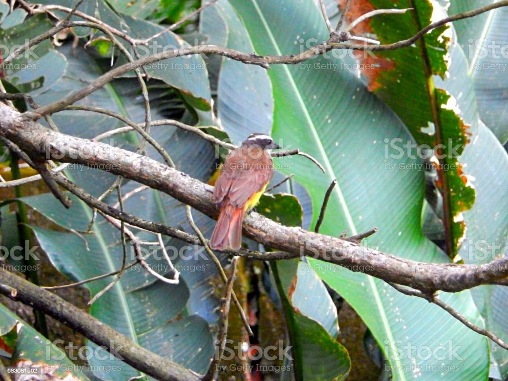 Exotic Bird foto de stock royalty-free