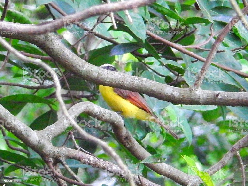 Exotic Bird zbiór zdjęć royalty-free